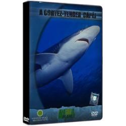DVD A Cortez-tenger cápái