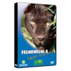 DVD Felnevelni a fekete leopárdot